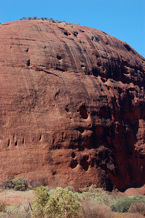 Kata Tjuta towers over you as you walk through one of the slots. They're so immense (look at the trees waayyy at the top).