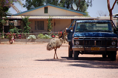 At one gas station where we stopped, there was this emu who took a particular disliking (or maybe liking) to the mop in the back of this truck. It kept pecking at the pecking at the mop head, setting the strands flying. It was the funniest thing!