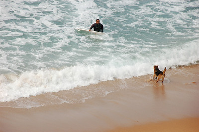 The couple dogs that were on the beach would stand there looking out intently at the surfers. Every time a surfer came in, the dogs would rush over to see if it was his human, and would go trotting off again to continue looking out at the ocean when it wasn't. When it was, the dogs would bound toward him and bounce around his human.