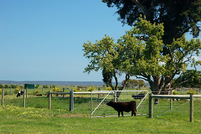 Warrook cattle farm.