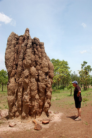 All along the drive from Darwin to Kakadu, there are termite mounds of every size, from tiny little bumps to mounds that tower above me.