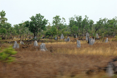 At one point, there were so many small termite mounds it looked like headstones in a cemetery.