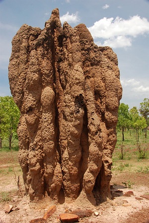 A Cathedral mound. This mound could be over a hundred years old, as could the queen termite.