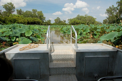 Ned, our captain, took us into a huge patch of water lilies.