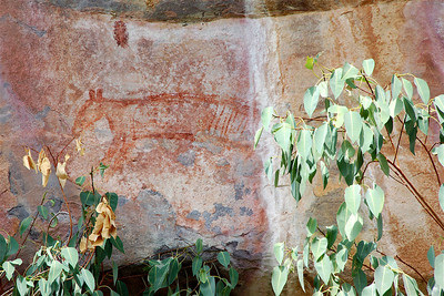Rock painting of a thylacine, or Tasmanian tiger. It was a marsupial carnivore that became extinct on mainland Australia thousands of years ago.
