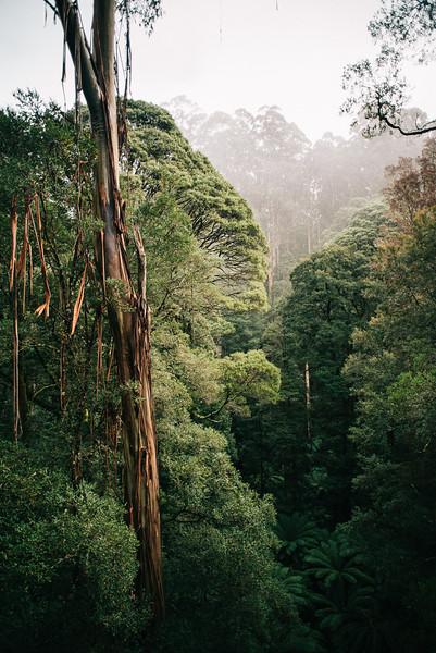 The crown of australias rainforest
