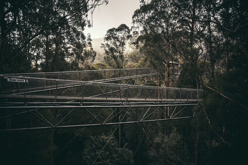 Walking 30 meters above the ground at the Otway Treetop Walk