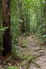 Rain forest trail, Kinabalu National Park, Sabah, Malaysian Borneo