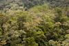 Rain forest, Mount Kinabalu foothills