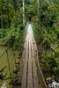 Suspension bridge, Danum Valley, Sabah, Borneo