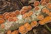 Bracket Fungus, Bako National Park, Sarawak, Borneo