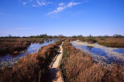 Salin de Madon marsh - walkway through the marsh