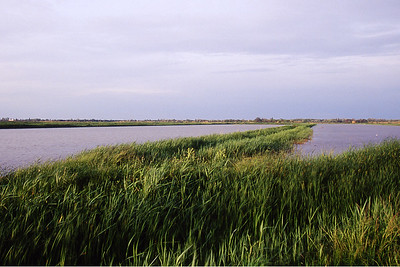 Rice fields and dikes