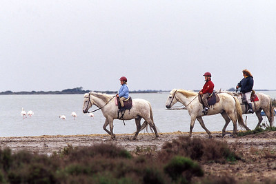 Camargue white horses - trail riding on the Camargue delta