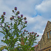 Thistle and Hall #2