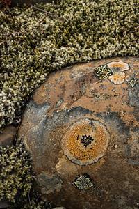 Low-lying organisms dot the landscape