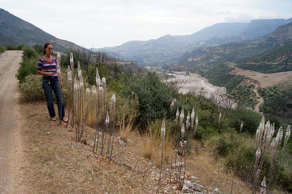 Selinountas river valley
