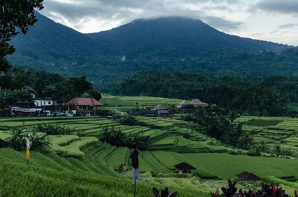Rice fields of Jatiluwih
