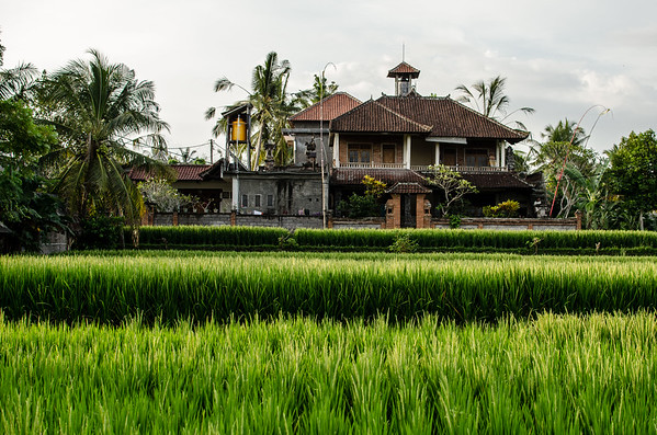 Rice Fields of Tegalalang