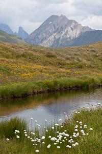 Cotton grass and alpine flowers, Italian Alps