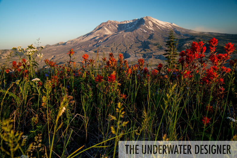 Life at Mount Saint Helens