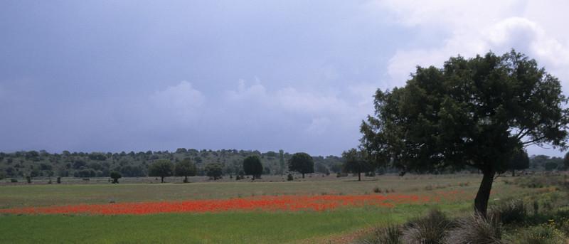 Poppyfield Spain
