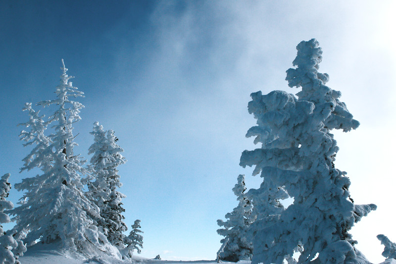 Snow Ents