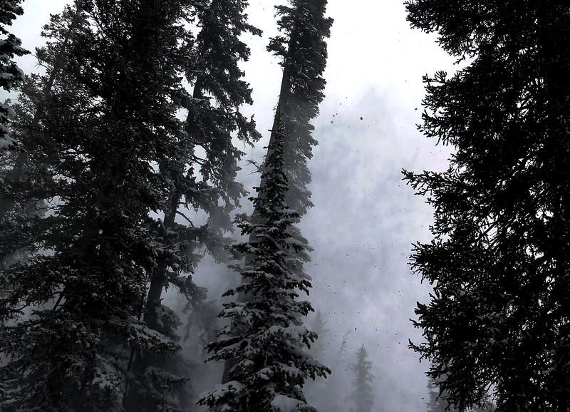 Trees, Wind, Snow