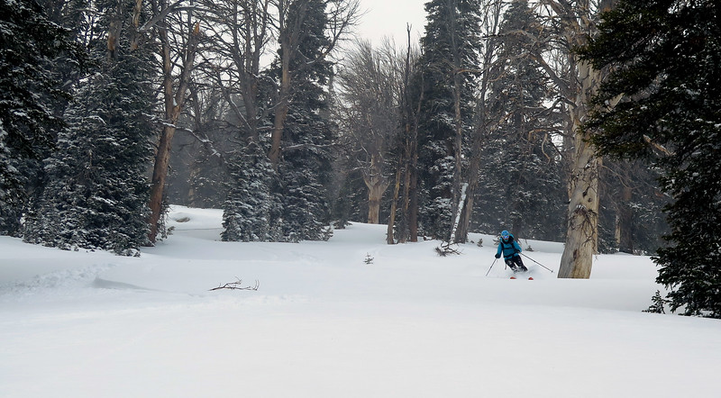 Snag Skiing
