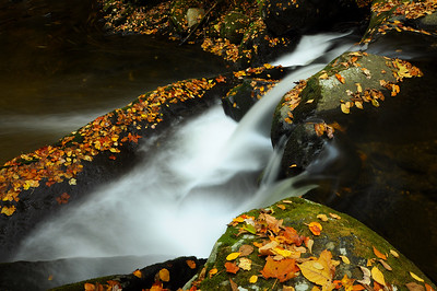 Oct 21st,  Another photo of the water and leaves around the GSMNP.