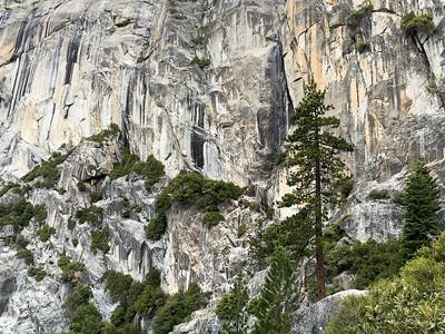 Living granite