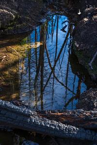 Winter brought much needed water, feeding the rebirth (Pine Ridge, Santa Cruz)