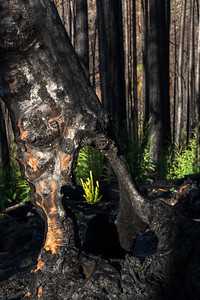 (Pine Ridge, Santa Cruz)
