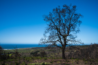 A few months later, the damage caused by the fires to the vegetation was stark (K&S Ranch, Pescadero)