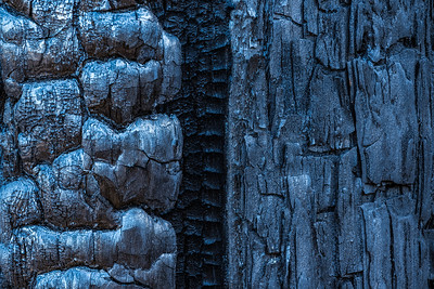 The intense heat charred multiple layers of bark (K&S Ranch, Pescadero)