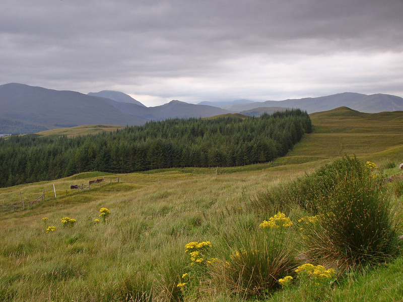 Plantation: A trip to Scotland: 4 days, 1400 miles. Totally amazing. Such beauty. Such mood.