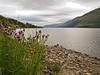 Loch Duich: A trip to Scotland: 4 days, 1400 miles. Totally amazing. Such beauty. Such mood.