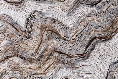 Weathered Eucalyptus abstract