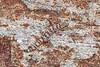 Weber's gecko, Pachydactylus weberi, Springbok, South Africa
