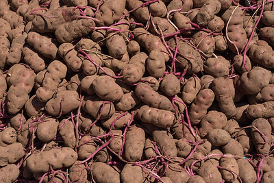 Perú is the origin of the potato, and boasts thousands of varieties