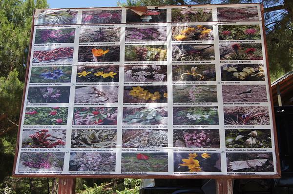 Flora info
