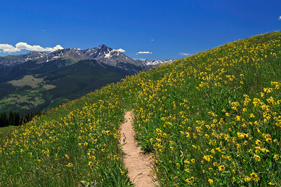 Ptarmigan Loop trail, Vail Mountain