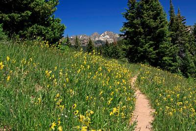 Ptarmigan Loop trail, Vail Mountain