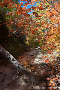 Mystery Canyon Fall Colors