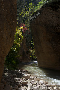 The Narrows Fall Colors