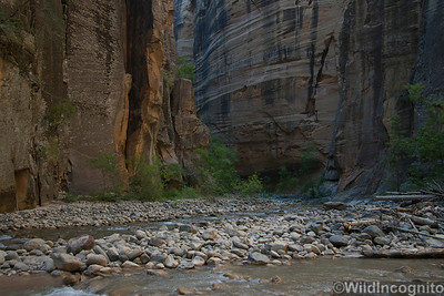 The Virgin River Zion National Park