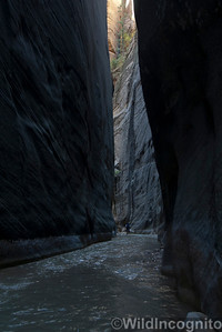 The Narrows Walls And Hiker