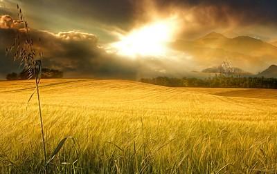 Heaven's Field jpg 1