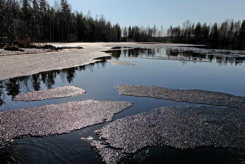 Melting ice of lake Jääsjärvi in May