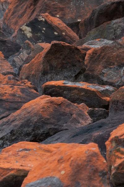 Trentepohlia iolithus on rocks at the shore of lake Jääsjärvi